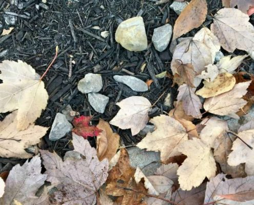 rock-and-leaf-pic